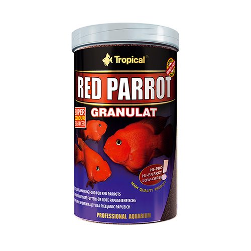 Tropical Red Parrot